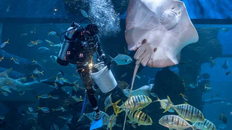 Berenang Bersama Hiu Jakarta Aquarium