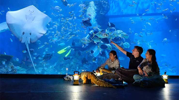Harga Tiket Jakarta Aquarium Terbaru