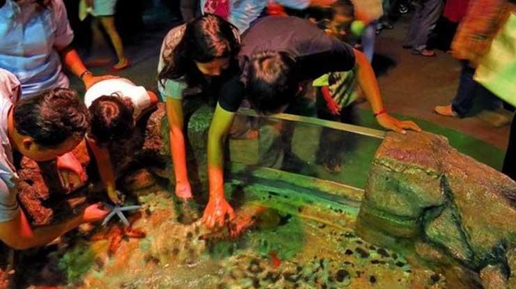 Jakarta Aquarium Touch Pool