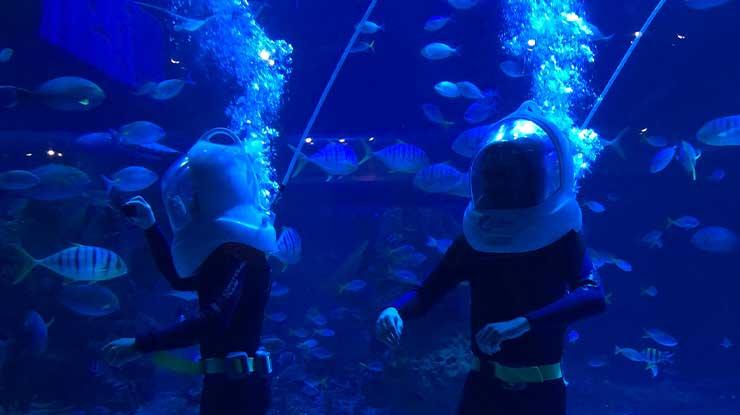 Jakarta aquarium Aqua Trekking